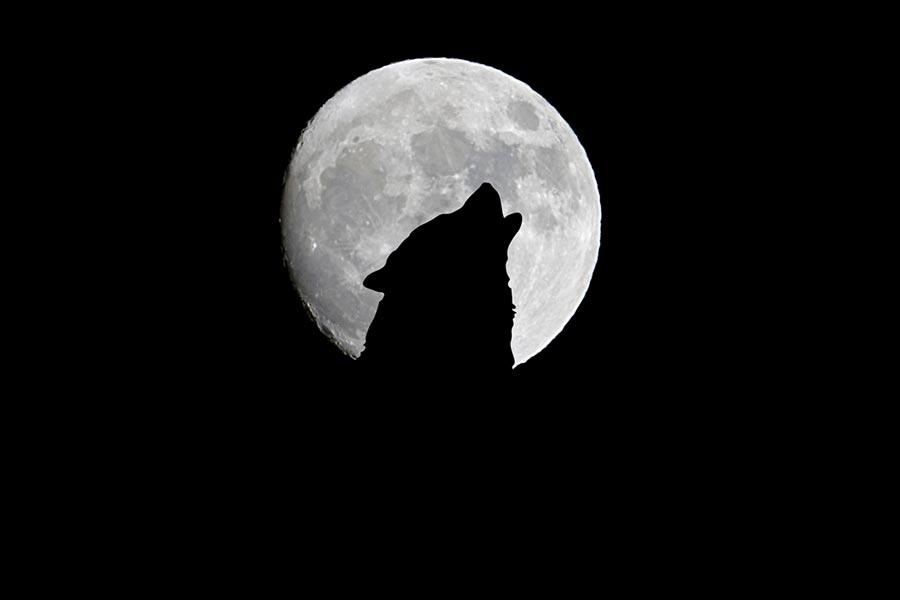 Lupercalia Vollmond-Ritual - Wolfsmond