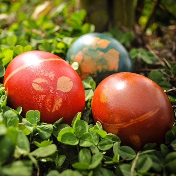 Bunte Ostereier liegen im Klee - Eine Tradition die auf Ostara zurück geht