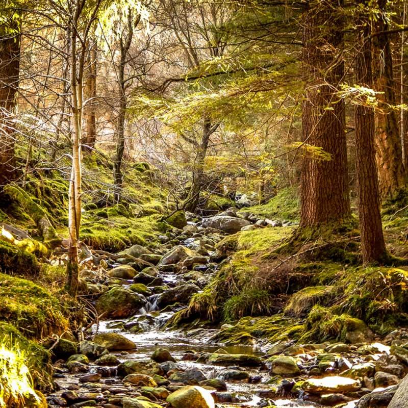 Bach tief im Wald bei Sonnenschein - Waldfeeling im August